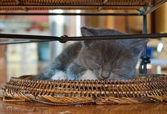 the clever grayling snoozes