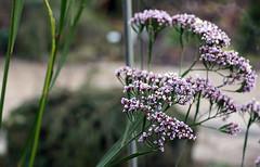 Botanisches