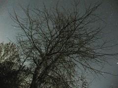 Puu ja tähtiä