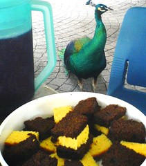 A Peacock and Some Cake