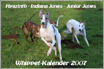 QL9T4841_Whippet_Kalennder_2007