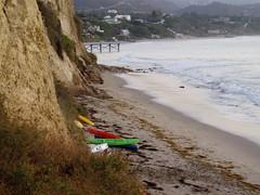 kelp and kayaks