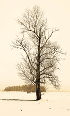Winter Tree photo by ryian