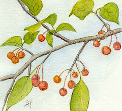 Day 6: Crabapples