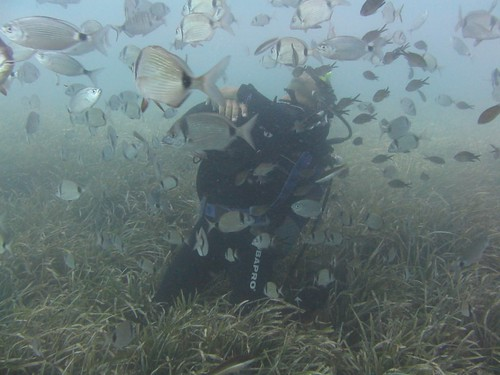 Diver concentrating