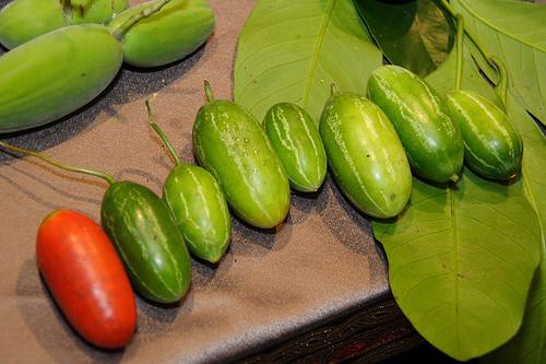紅瓜 (by Audiofan)