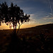 sunset backlight tree