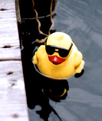 ROBO DUCK photo by William Charles Cross