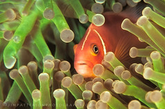 Mutualism - Vatu-i-Ra Channel, Fiji photo by Jim Patterson Photography