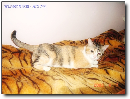 窗口邊的荳荳貓11
