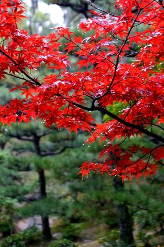 京都東福寺07