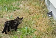 Dargo stalking the grayling