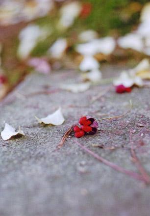 伊香保神社で見つけた小さい秋