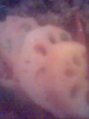 小菜 - 蓮藕