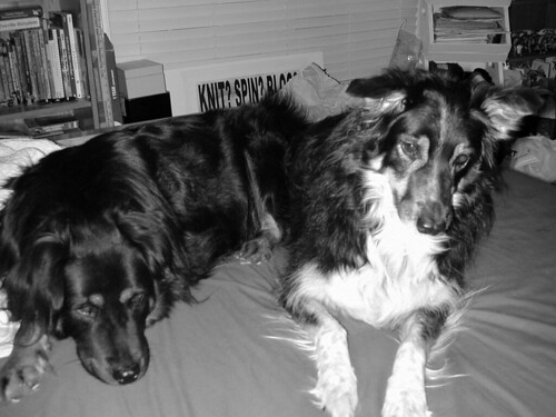 The Fiber Dogs