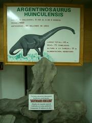 Neuquen Road Trip - 10 - Argentinosaurus bone