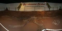 Neuquen Road Trip - 06 - Gigantosaurus