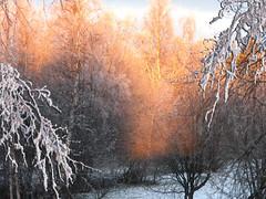 Sun light photo by Vaeltaja