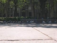 Palomas en la sombra