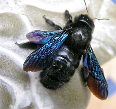 Identification r solu insecte for Bete qui mange le bois