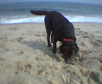 Coco at the beach