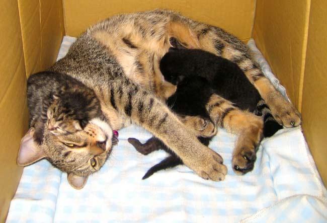 Moms make the best pillows!