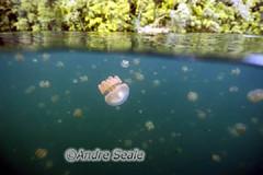 Palau agua-viva 2