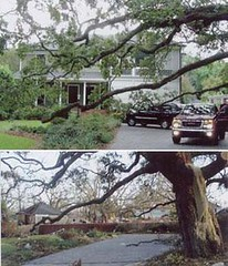 katrina before after photos
