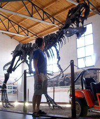 Neuquen Road Trip - 08 - Gigantosaurus