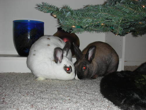 Snuggle buns under the tree