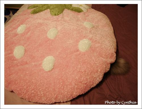 草莓墊之11