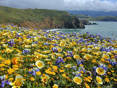 Mori Point in May photo by AGrinberg