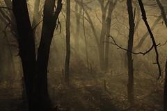 Hitchcock photo by Arbor Aesthetics