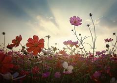 flower 005 photo by yein~