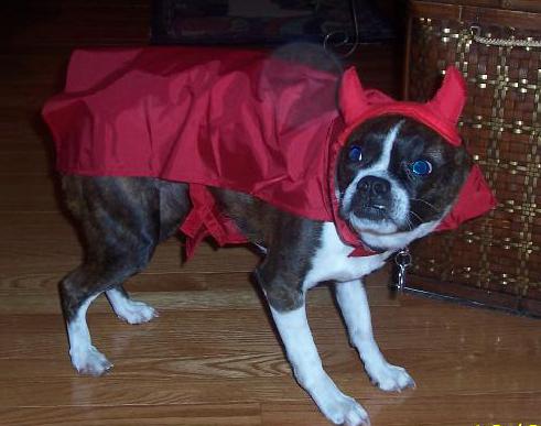 christmas devil3