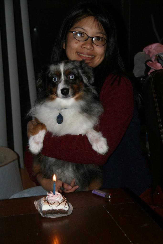 Dog Birthday Cake Pasadena