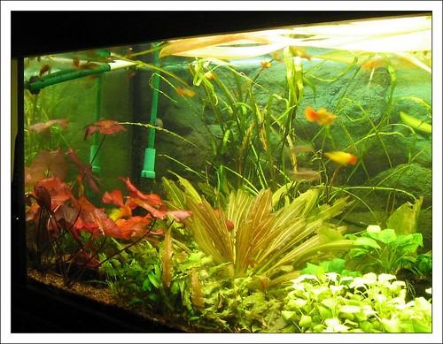 Aquarium Im Wohnzimmer – ElvenBride.com