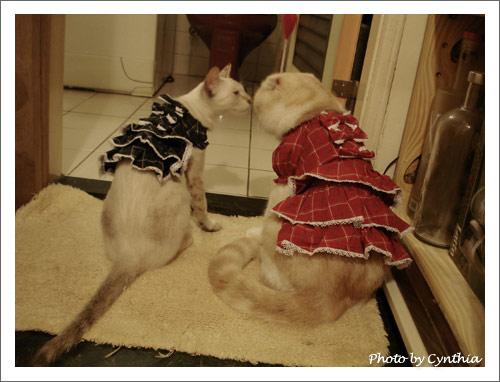 Biru & Sora 穿衣服