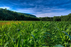 Corn Fields photo by Kaldoon