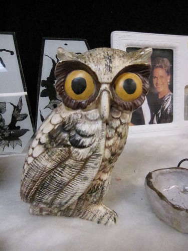 owl is shocked an appalled by your behavior