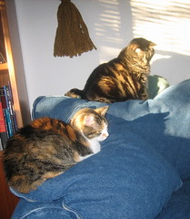 Cats in sun
