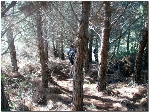 Trail de noel Ollioules 2006 (152)reworked