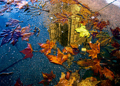 Parliament in a puddle photo by kimbar/Thanks for 1.75 million views!