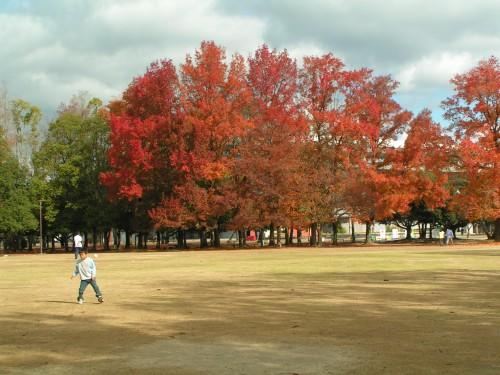 illuminations et dernières feuilles rouges