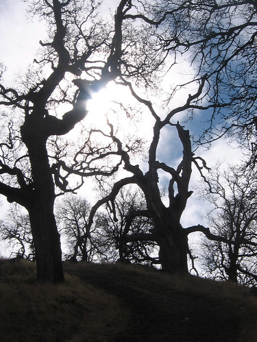 Ohlone Wilderness, January 2006