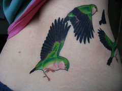 Bird tattoo colour back dark photo by Alison McCausland