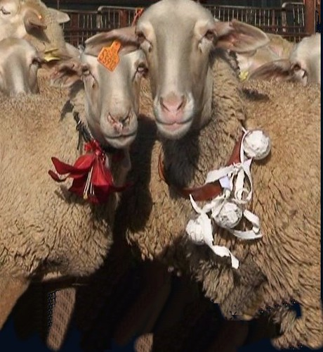 pareja de ovejas con esquilos artisticos