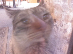 Blurry Simba, 12/09/06