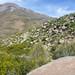 Petroglifos en la ruta al Chañi