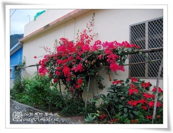 台東巴浪家-路旁花朵